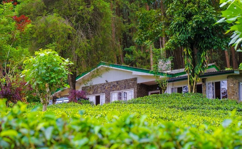 Bungalow surrounded tea estate