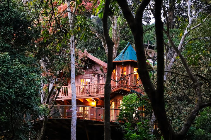 Tree House in Forest