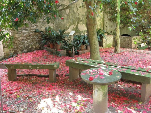 Camelie - tappeto di petali
