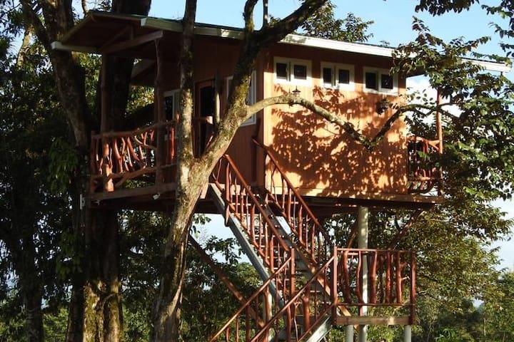 Termas Jilamito Tree House