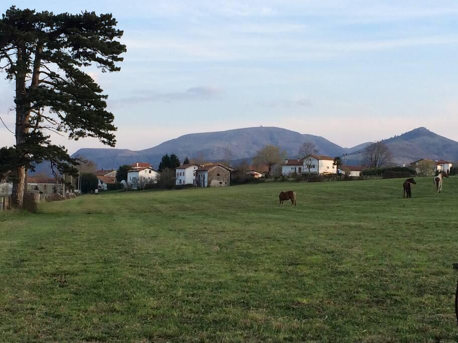 à l'arrivée sur le village de Larressore, avec au fond l'Artzamendi et à droite le pic du Mondarain.