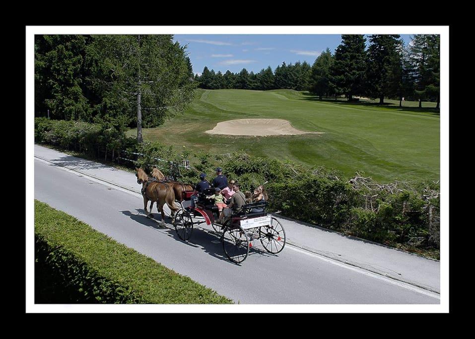 Vue sur le golf en été