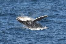 Whale watch from the verandah or nearby headlands