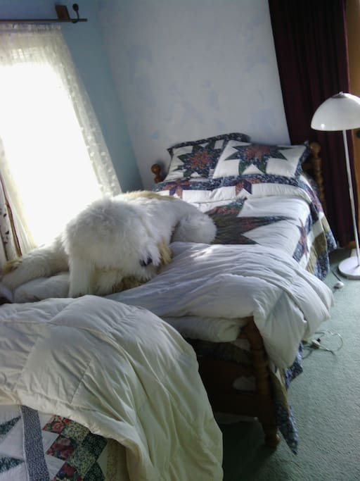 A full size bed and a twin bed just fit into this room (the dog is stuffed and can easily be expelled from the room)