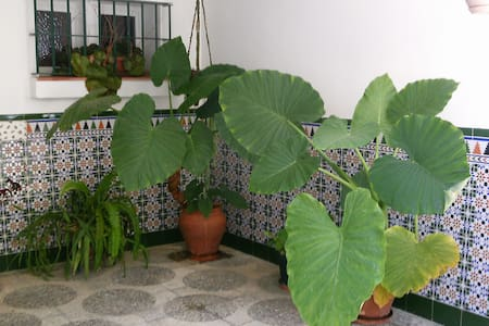 Alojamiento con muchas facilidades - San Roque