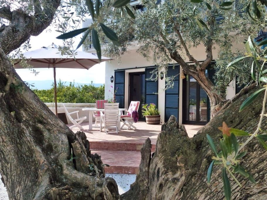 Calm terrace in the shadows of olive trees...