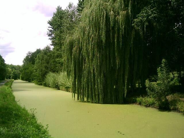 Au coeur de la Venise Verte
