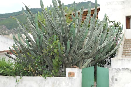 "Casa ""Il Cactus"" - House"