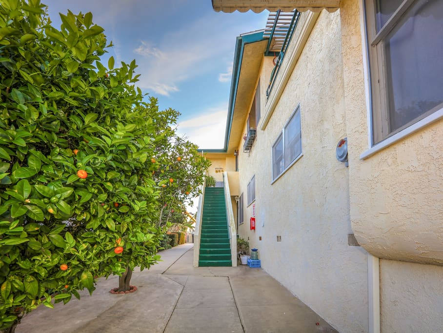 Fruit trees line the entryway to this lovely rental.