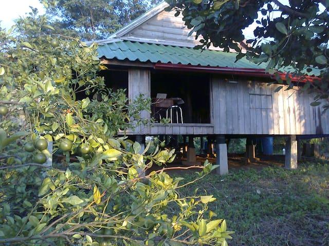 Ratanakiri Mango Mountain  - Banlung - Barraca