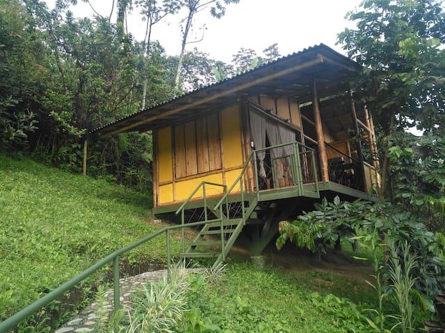 Sensational Cabin, Natural Reserve, Quindio