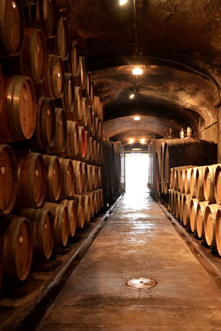 Undergound Wine Cellar