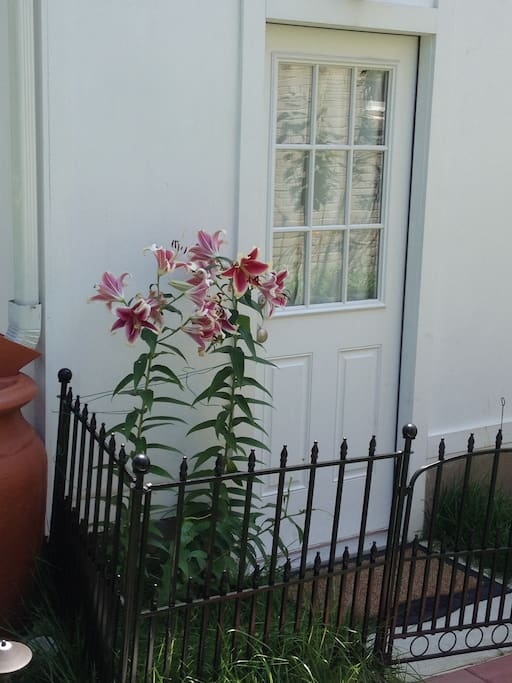Private entrance (lilies bloom in July.)