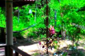 Picture of Quiet Jungle View Garden Bungalow