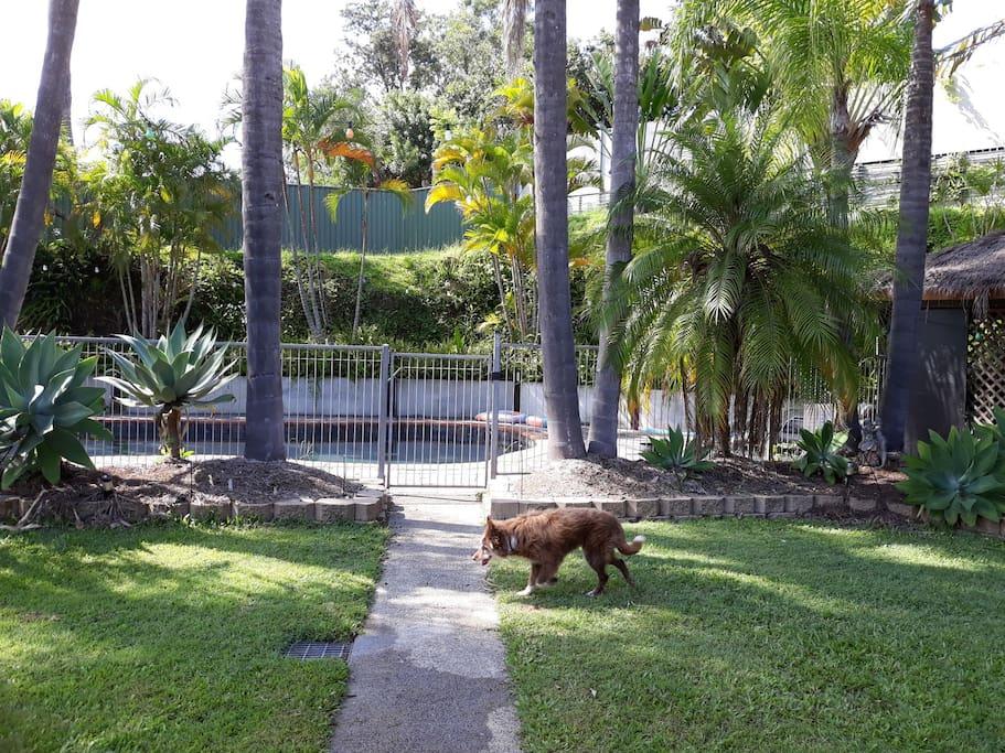 Large pet friendly backyard