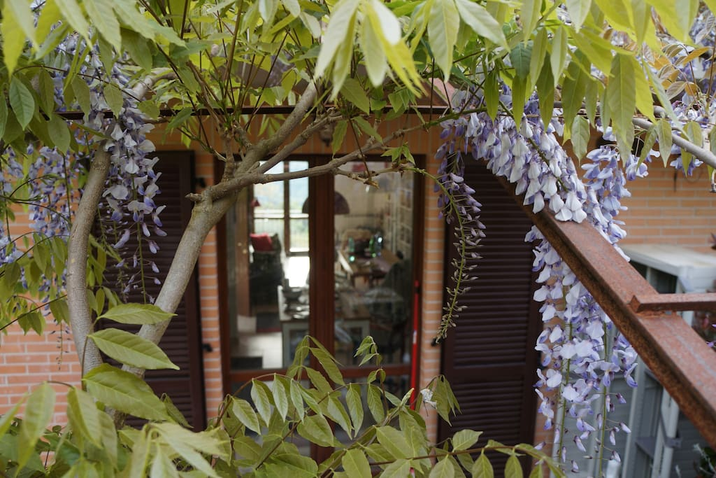 Wisteria canopy at kitchen door for summer shade