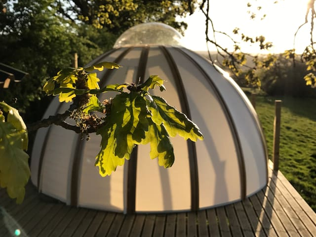 Oak Tree Dome with a View