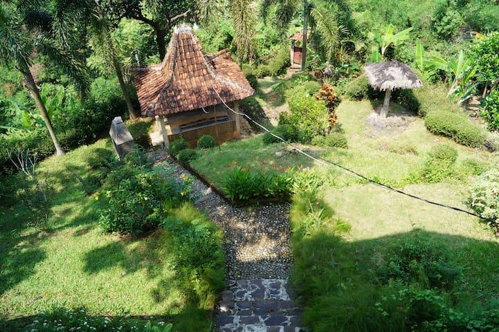 Garden around house