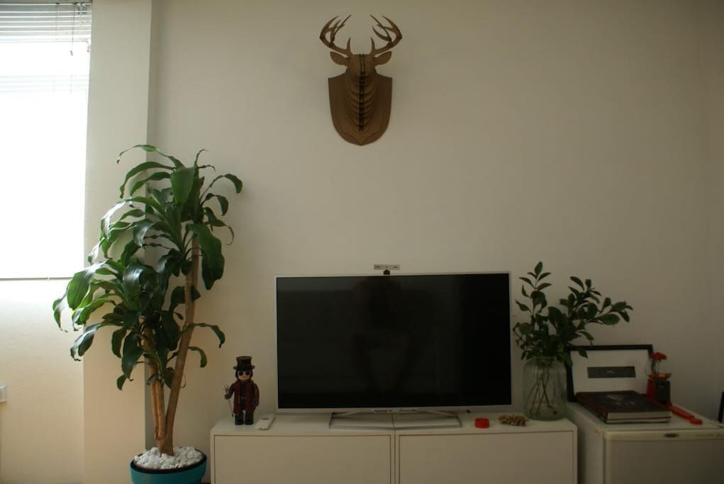 TV with Netflix and DVD player