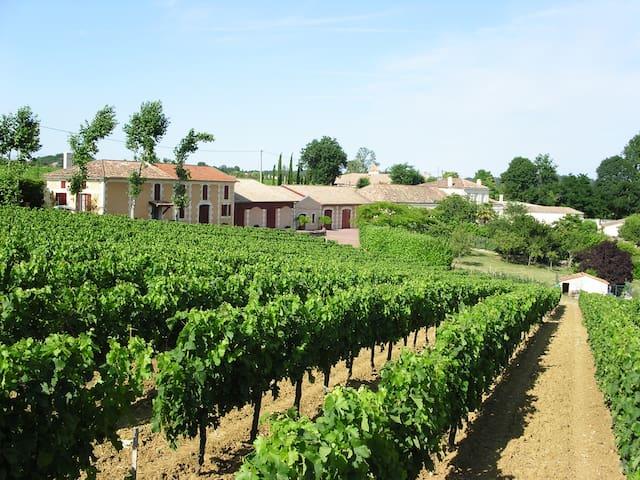 Château La Tuilière:  oenotourisme en Bordelais