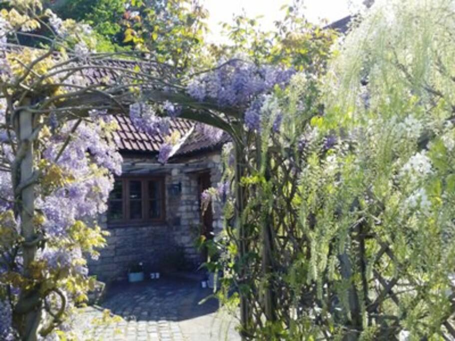 wysteria outside front of mill