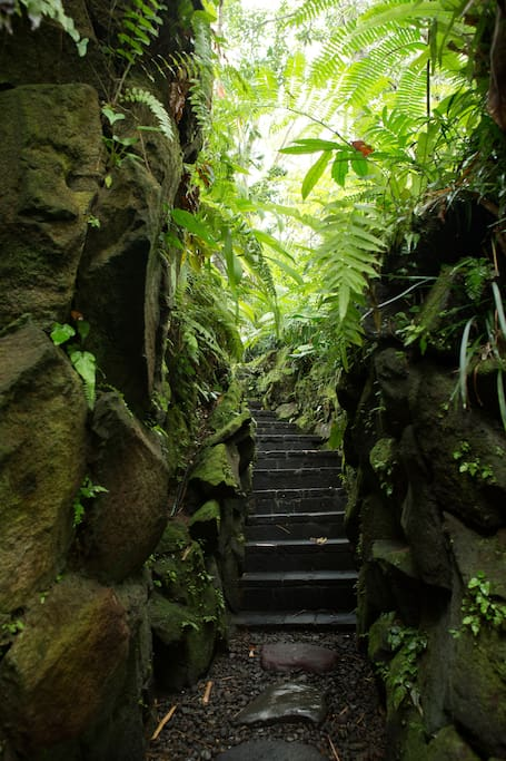which leads down a short flight of stairs shaded by tropical plants...