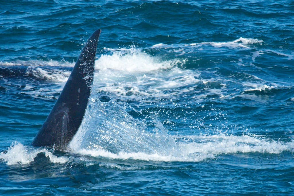 Watch the whales from the Oubaai whale deck.  The whale season is July to November.