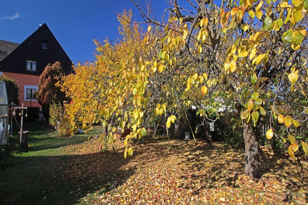 Goldener Oktober am Haus Waldstraße