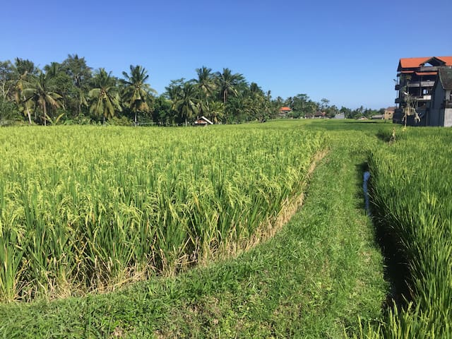 Walk among the rice paddies directly behind the villa.