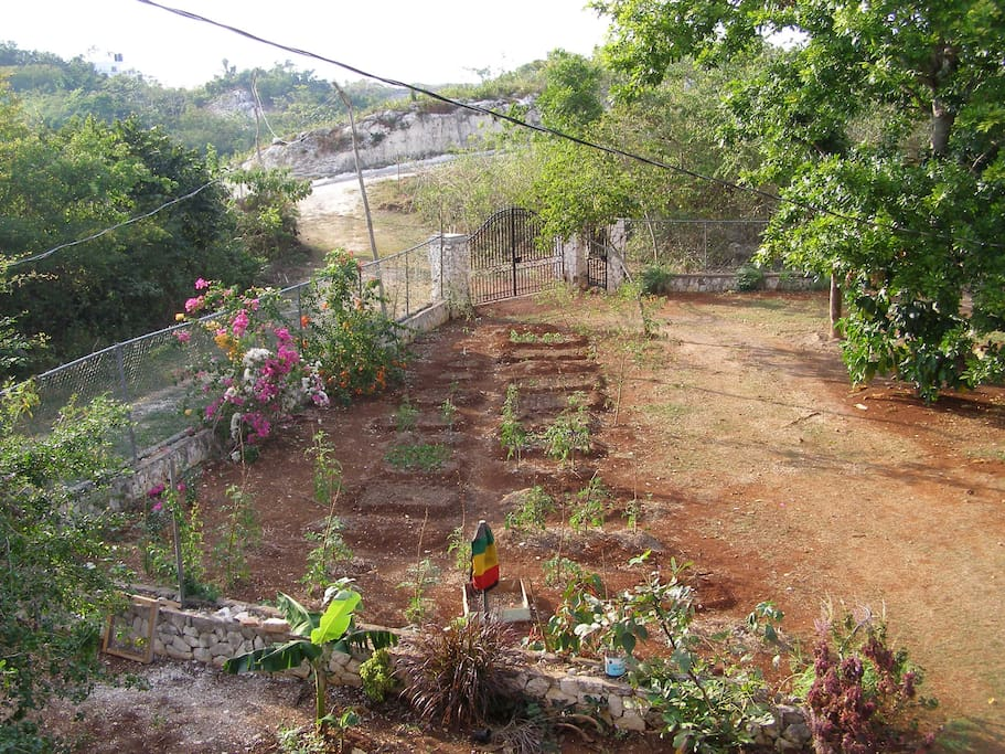 Secluded front yard,garden, driveway, gate and lane to the main road.