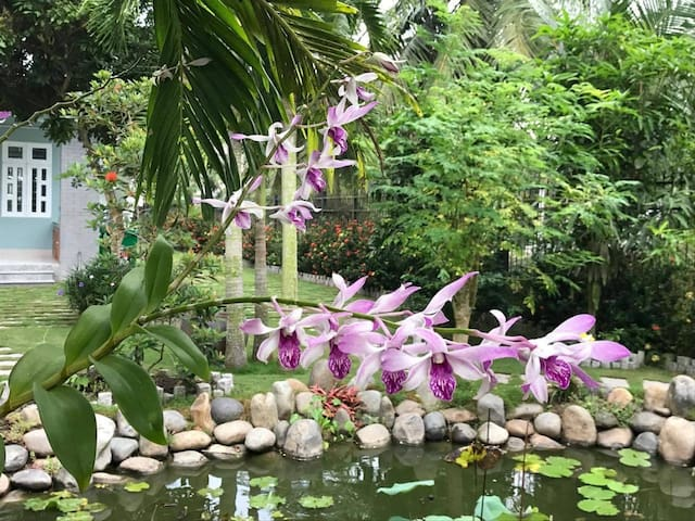 An Oasis in the Culturally-Rich Mekong Delta