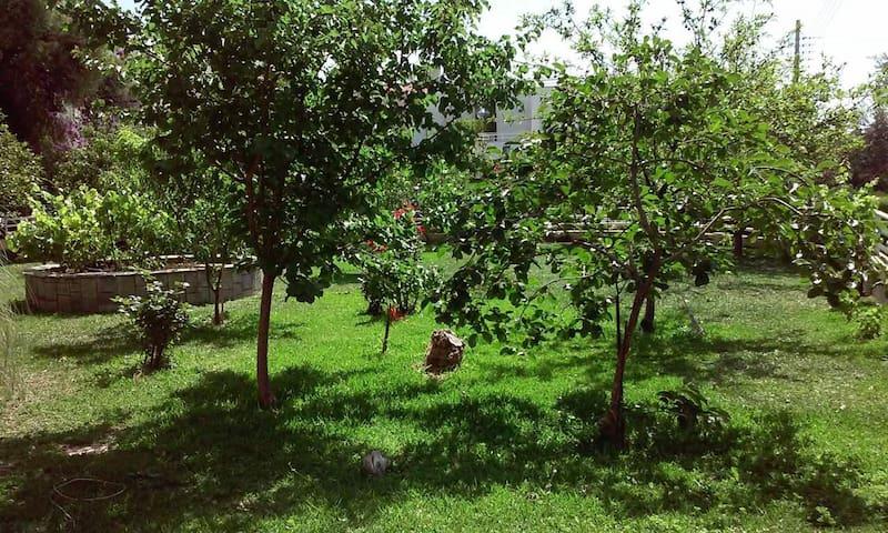 Sunny garden studio, near the sea - Glifada - House