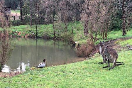 Kangaroo Cottage -             Hills Retreat BnB