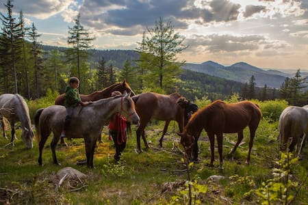 Horses & peace of mind in the mountains. - House