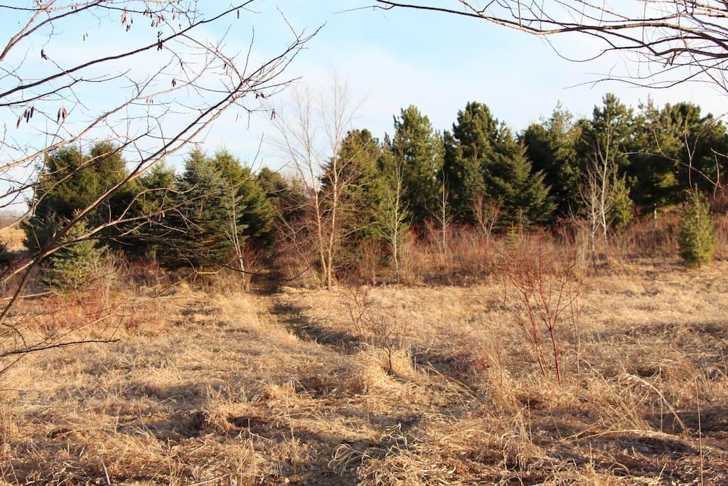 Explore our ecological restoration of native woodland