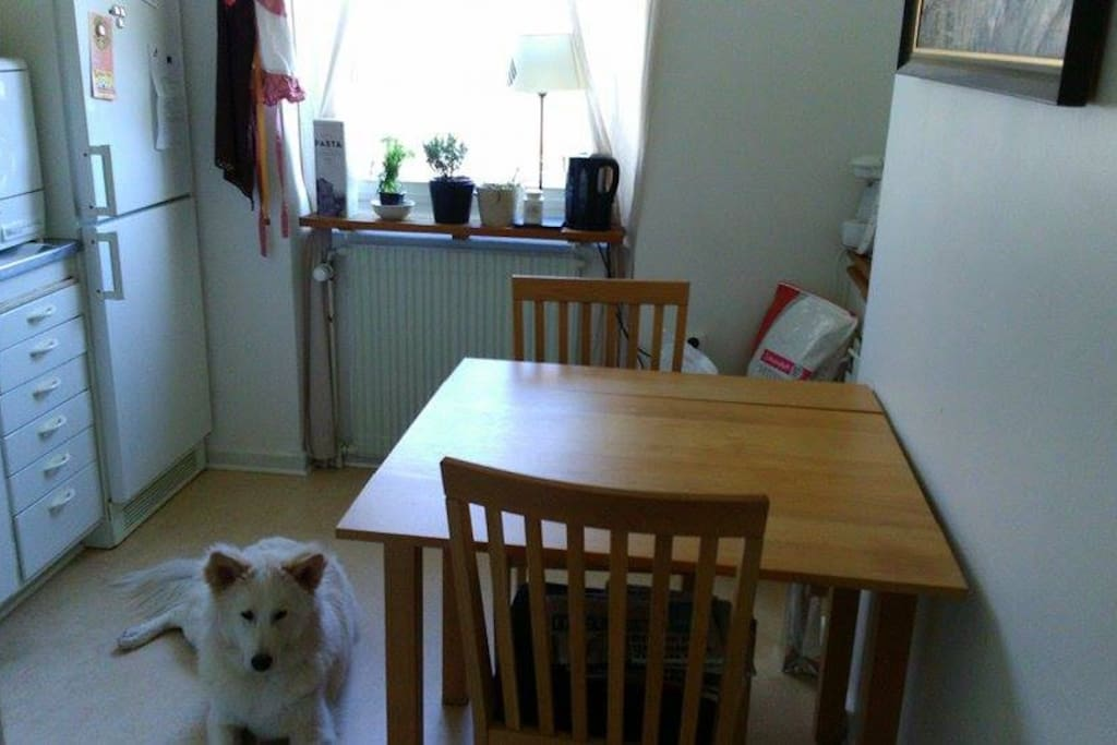 Stort kök med matbord och stolar. Kyl, frys, mikro, spis och ugn. (OBS! Hunden ingår inte.)
