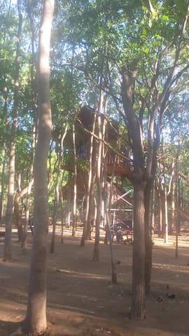 Sigiriya Elephant camping & camping