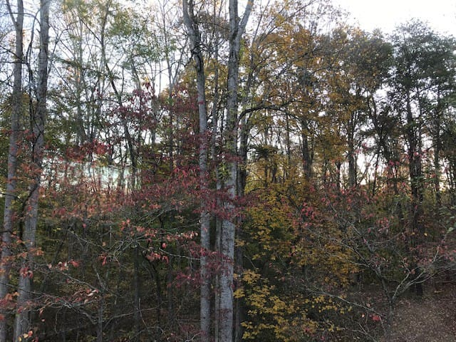fall colors from the deck out back