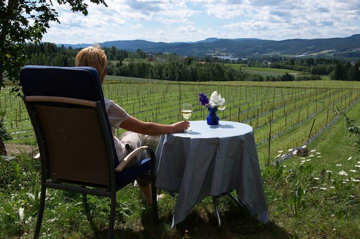 Fott utsikt utover vinmarken og fruktlandskapet
