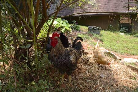 Romantic Farmhouse Retreat*FarmStay*
