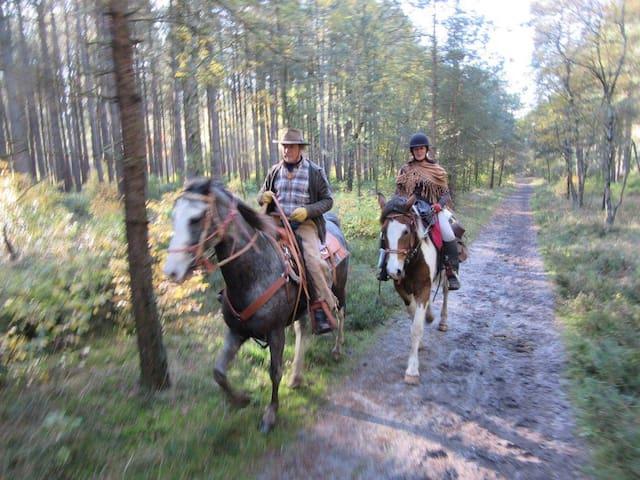 Paarden rit