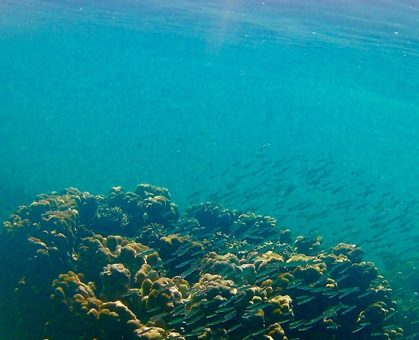 Fantastic Reef off our beach