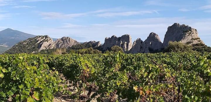 Nid douillet en Provence