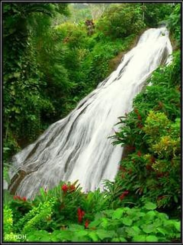 Enjoy a beautiful day at the Shaw Park Botanical Garden and Waterfalls