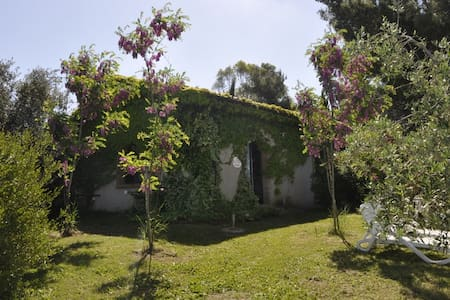 cottage Olivo 3 in campagna a Cecina