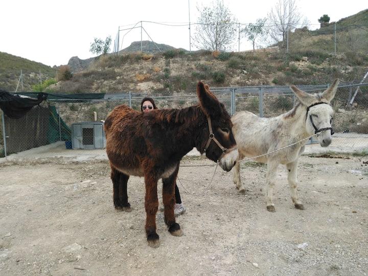 Conoce burros más grandes que caballos