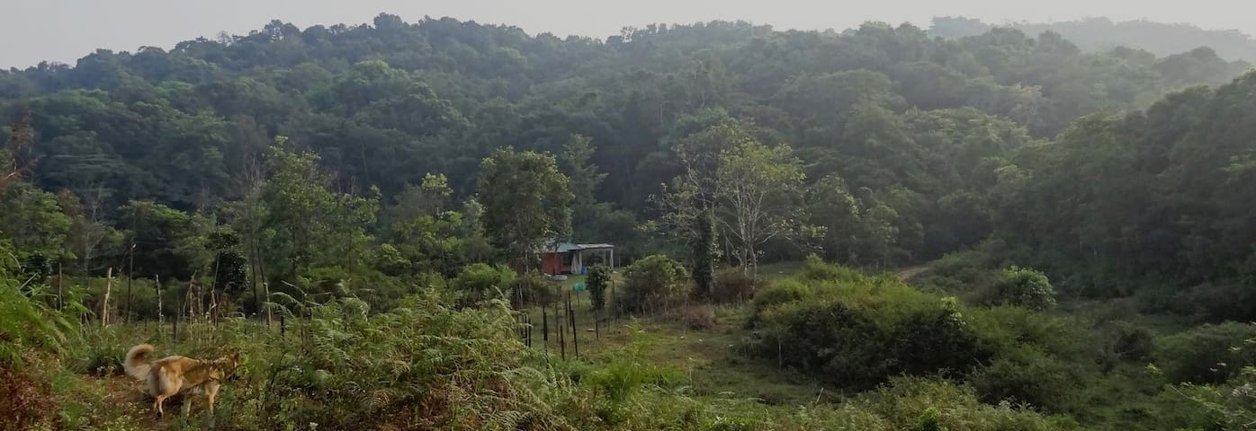 Jungle Retreat in Wayanad, Kerala
