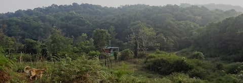 Digital Detox Jungle Oasis in Wayanad, Kerala