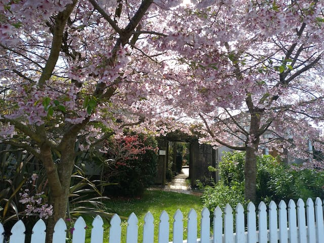 The Cherry trees in spring blossom