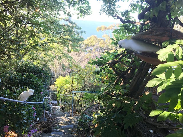 Enjoy the Garden of the Stars, Astrological terraced gardens and the former home of Astrologer to the Stars. Richard Sterling was well known for his TV show and Astrology columns in the Women's Weekly in Australia during the 70's - 80's.